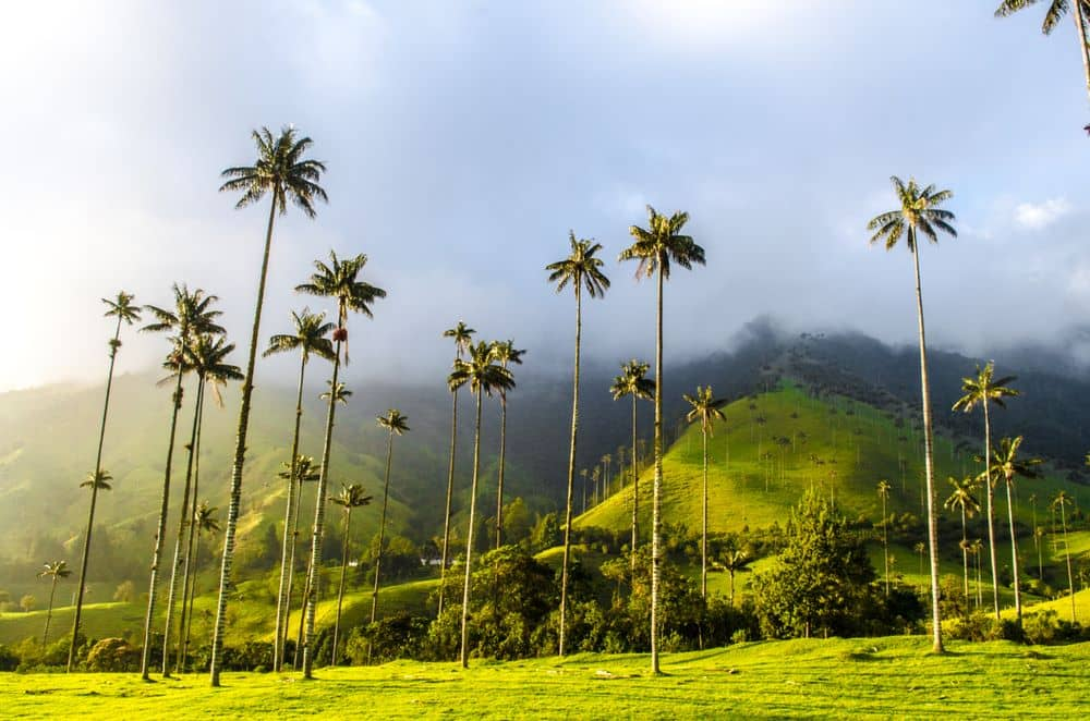 Tour Salento y el Valle de Cocora Colombia