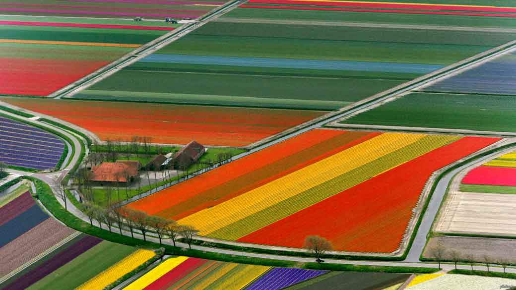Campos de Flores Países Bajos